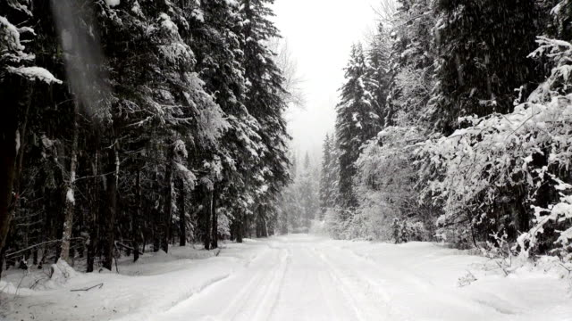 Snow covered road in evergreen forest during heavy puffy snow storm.