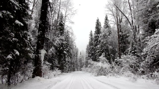 Snow covered road in evergreen forest during heavy puffy snowflake snow storm.