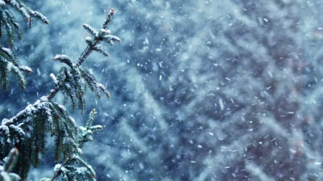 snow covered spruce tree in snowfall - neve video stock e b–roll