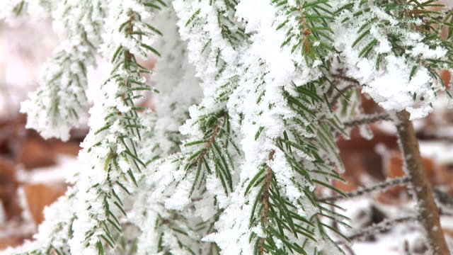 hd: snow covered spruce tree - coniferous stock videos & royalty-free footage