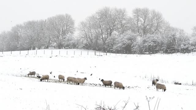 snow covered the countryside in north yorkshire northern england on monday. clean : snow covers yorkshire countryside on january 14, 2013 in skipton,... - skipton stock videos & royalty-free footage