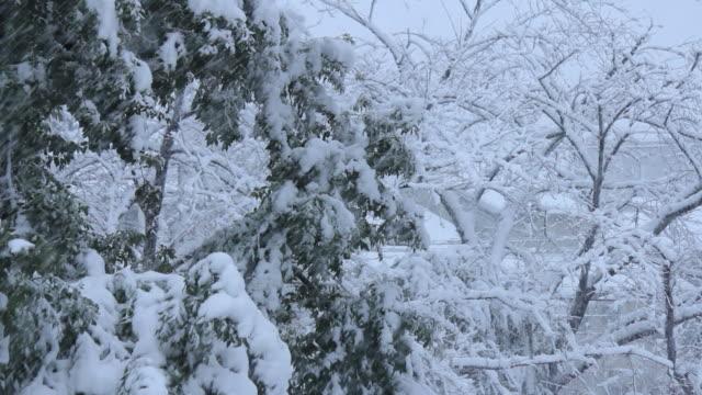 雪に覆われた公園の。東京,日本