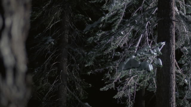 ms snow covered trees at night/ mammoth lakes, california, usa - mammoth lakes video stock e b–roll