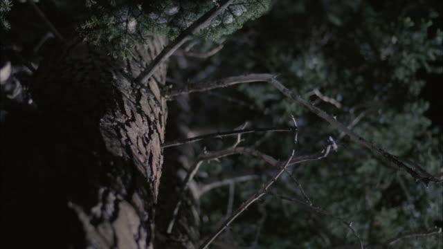 ms tu td snow covered trees at night / mammoth lakes, california, usa - mammoth lakes video stock e b–roll