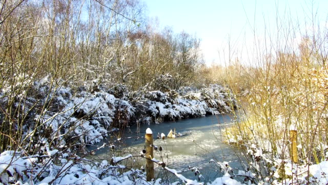 snow covered trees emerge from a bog at shorne woods country park on february 27, 2018 in shorne ridgeway, united kingdom. freezing weather... - bog stock videos & royalty-free footage