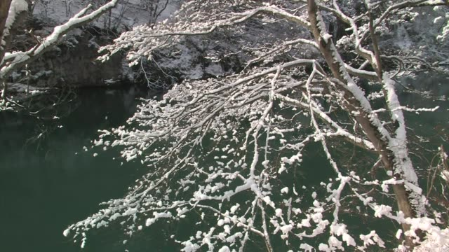 Snow covered trees hang over a river, Honshu, Japan