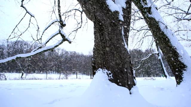 snow covered trees; hd dolly - kvist bildbanksvideor och videomaterial från bakom kulisserna