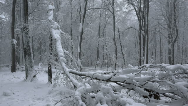 snow covered trees in forest - fallen tree stock videos and b-roll footage