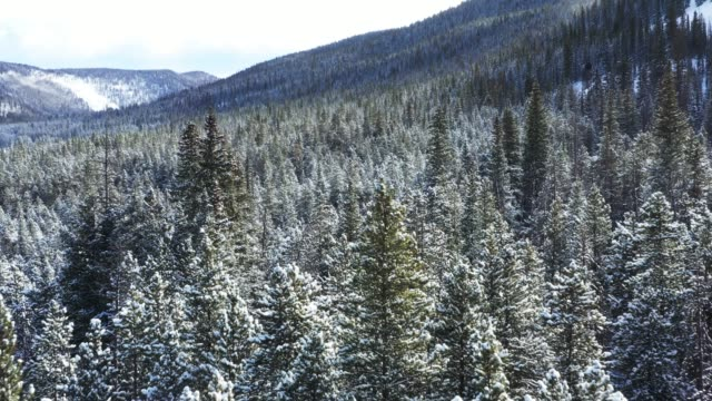 snow covered treetops, aerial - plant attribute stock videos and b-roll footage