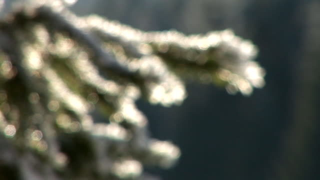 hd: snow covered twig - twig stock videos & royalty-free footage