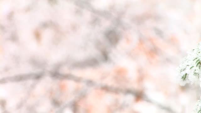 vídeos y material grabado en eventos de stock de hd: cubierto de nieve twigs - aguja parte de planta