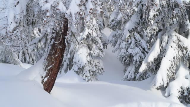 snow covered winter forest near bettmeralp.  bettmeralp, canton valais, switzerland. - durability stock videos & royalty-free footage