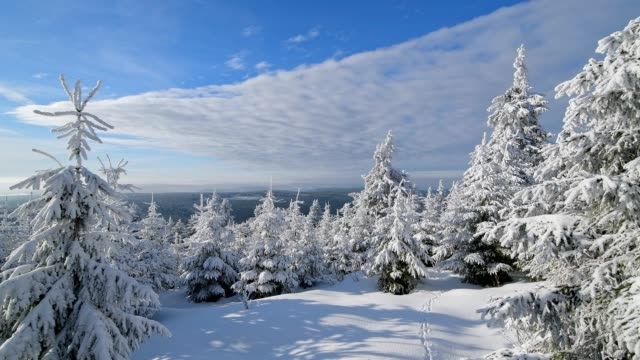 snow covered winter landscape with coniferous trees, mount fichtelberg, oberwiesenthal, erzgebirge, ore mountains, saxony, germany, europe - saxony stock videos & royalty-free footage