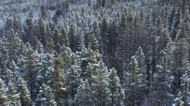 snow covered woodland landscape, aerial - plant attribute stock videos and b-roll footage