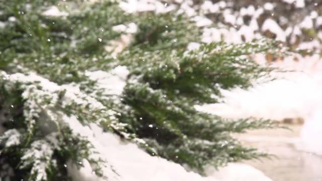 HD SUPER LENTO MO: Neve cobertura o Cypress