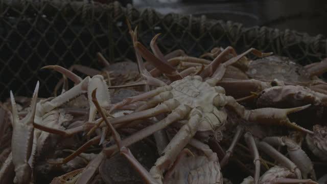 snow crabs added to net, alaska. - カニ点の映像素材/bロール