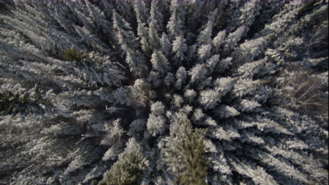 Snow dusts a conifer boreal forest in Canada.