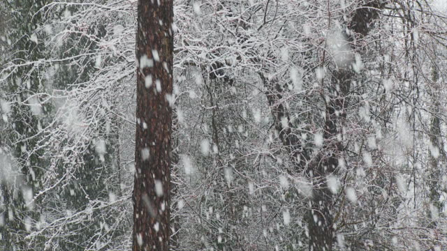 SLO MO MS Snow fall in forest / Atlanta, Georgia, USA