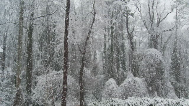slo mo ws snow fall in forest / atlanta, georgia, usa - snowing stock videos & royalty-free footage
