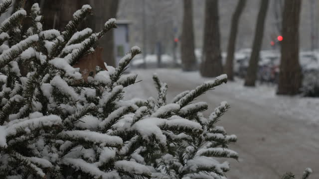 snow falling down at cloudy day in germany - baumgruppe stock-videos und b-roll-filmmaterial