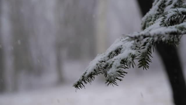 vídeos y material grabado en eventos de stock de snow falling in a forest (slow motion) - escarcha