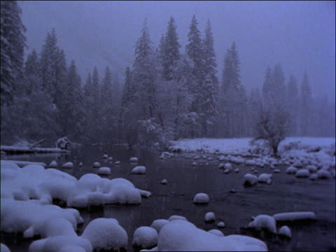 snow falling in forest with stream / sierra nevada mountains, california - pinacee video stock e b–roll