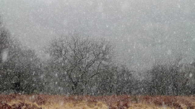 ws snow falling in front of bare trees / ystradfellte, wales - powys stock videos & royalty-free footage