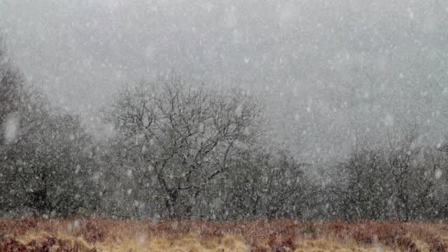 ws snow falling in front of bare trees / ystradfellte, wales - bare tree bildbanksvideor och videomaterial från bakom kulisserna