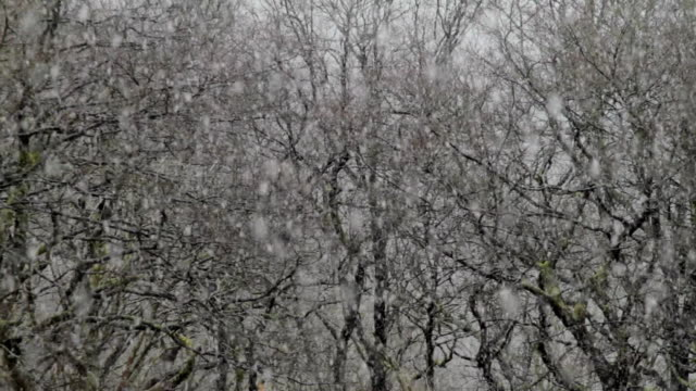 vidéos et rushes de la cu snow falling in front of branches of bare trees / ystradfellte, wales - bare tree