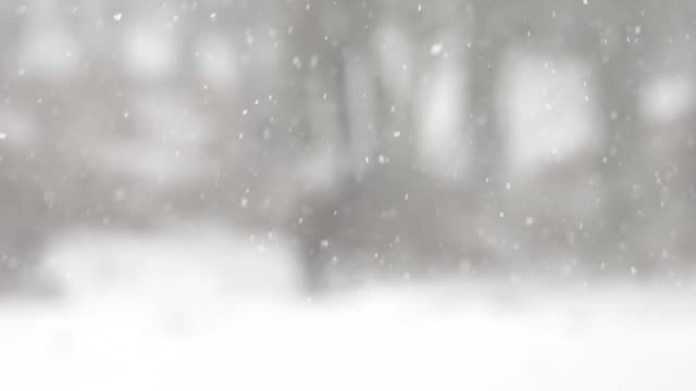 snow falling, new forest pony (equus caballus) in distance - snowflake stock videos & royalty-free footage