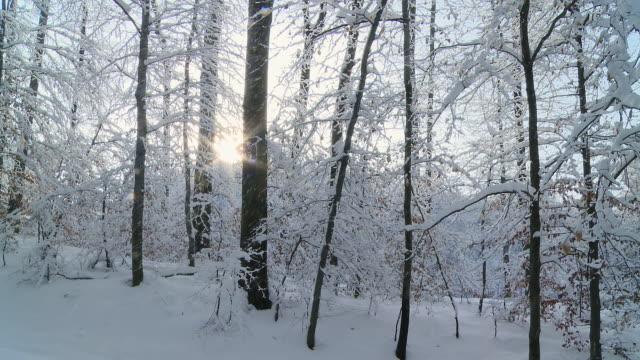 hd: schnee fallen auf bäumen - ast pflanzenbestandteil stock-videos und b-roll-filmmaterial