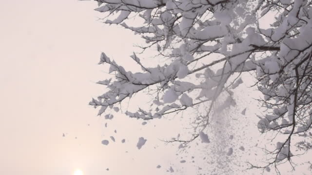 HD SUPER SLOW MOTION: Neve cadere alberi