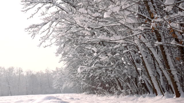 hd super slow mo: snow falling off trees - named wilderness area stock videos & royalty-free footage
