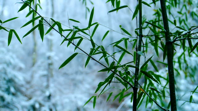 snow falling on bamboo leaf - bamboo plant stock videos & royalty-free footage
