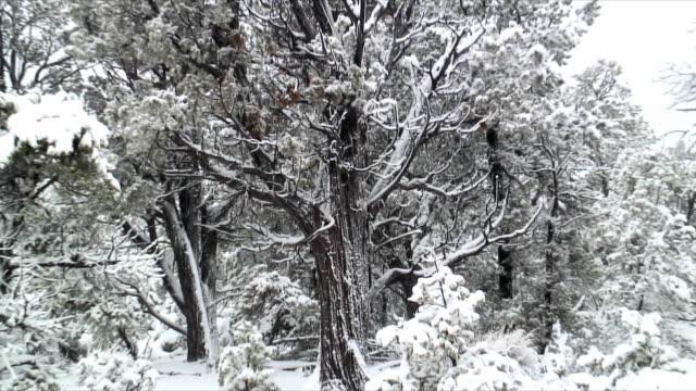 cu zo ms snow falling on bare tree, usa - peter snow stock videos & royalty-free footage