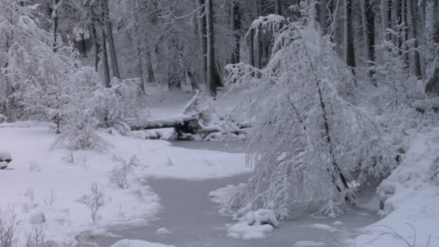 ws snow falling on frozen stream and trees in woods in yosemite national park / california, usa - yosemite national park video stock e b–roll
