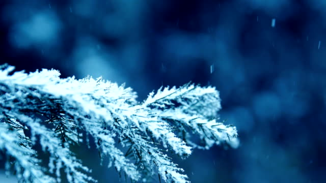 snow falling on pine tree branches - frost stock videos & royalty-free footage