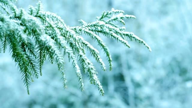vídeos de stock e filmes b-roll de snow falling on pine tree branches - abeto