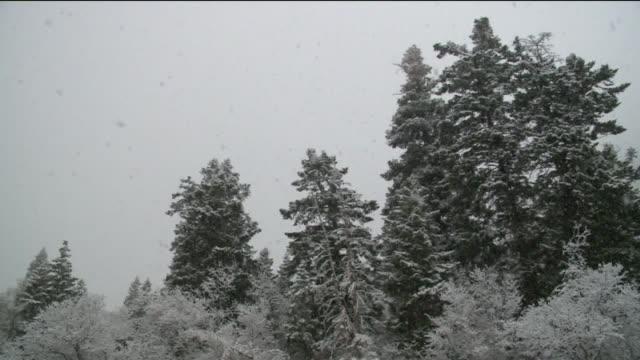 vídeos de stock, filmes e b-roll de kstu snow falling on pine trees at little cottonwood canyon in salt lake city utah in november 25 2015 - cottonwood canyon