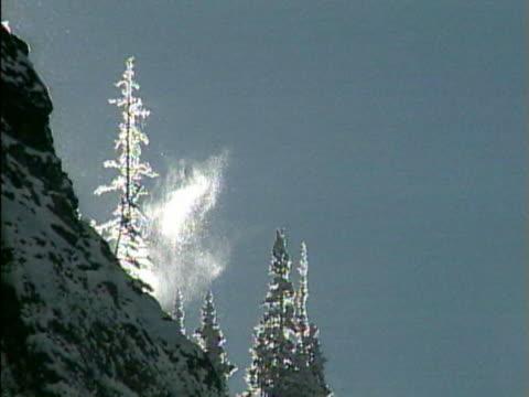 WS Snow falling on pine trees / Colorado, USA