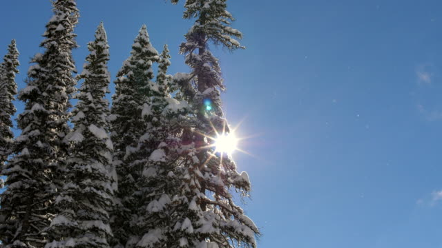 snow falling on the day - spruce stock videos & royalty-free footage