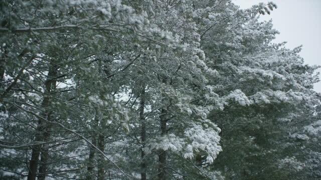 snow falling on tree / south korea - zweig stock-videos und b-roll-filmmaterial