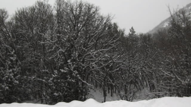 ws slo mo pan snow falling on trees / payson, utah, usa - payson stock videos & royalty-free footage