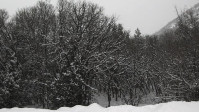 WS SLO MO PAN Snow falling on trees / Payson, Utah, USA