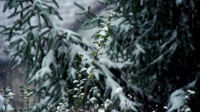 Snow falling on trees, winter landscape