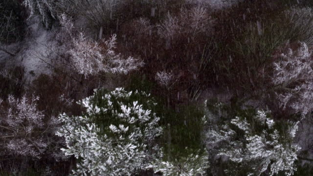 AERIAL: Snow falling on treetops