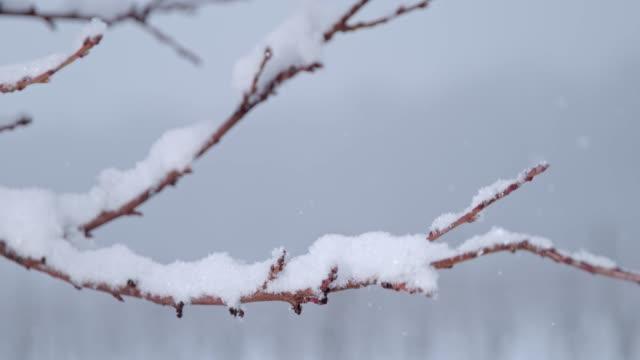 冬の木の枝、超スローモーションに降る雪 - 枝点の映像素材/bロール