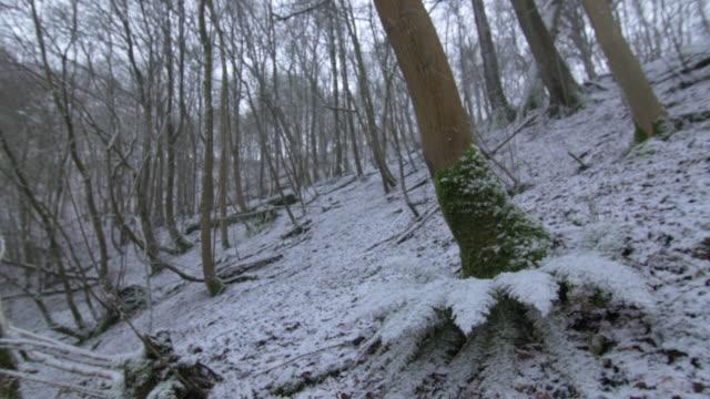 vídeos de stock, filmes e b-roll de snow falling onto snowy forest, sussex - filme documentário