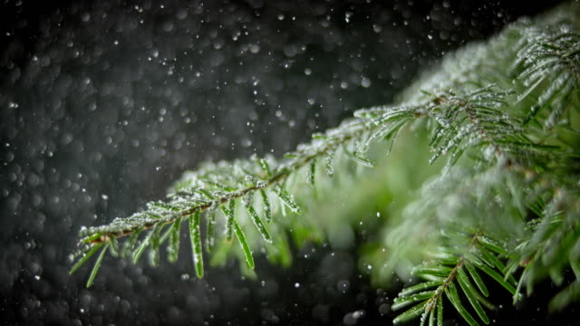 slo mo ld snow falling onto the twig of a spruce tree - spruce stock videos & royalty-free footage