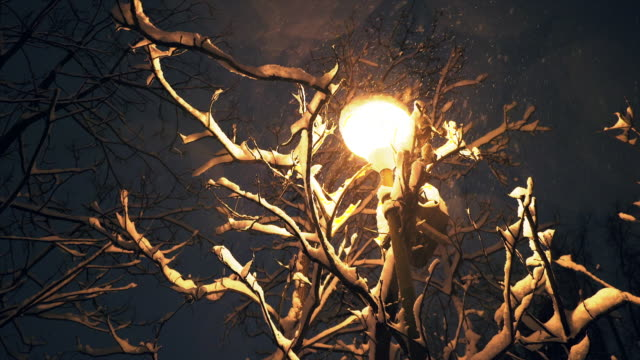 snow falling over a street lantern in the night. - branch plant part stock videos and b-roll footage